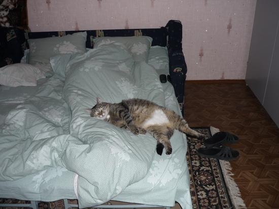 Жирный ленивый кот
